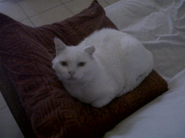 LULLY papi blanc Img02317
