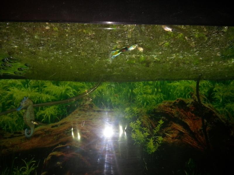 Mon aquarium avec betta et guppy 20141212