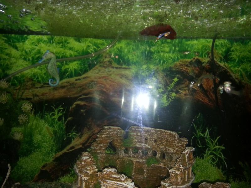Mon aquarium avec betta et guppy 20141213