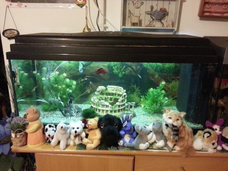 Mon aquarium avec betta et guppy 20150117