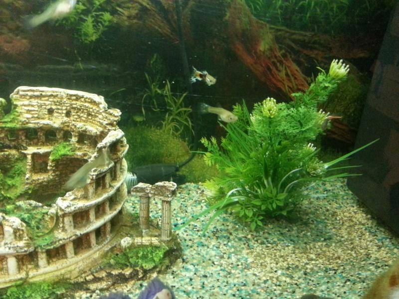 Mon aquarium avec betta et guppy 20150120