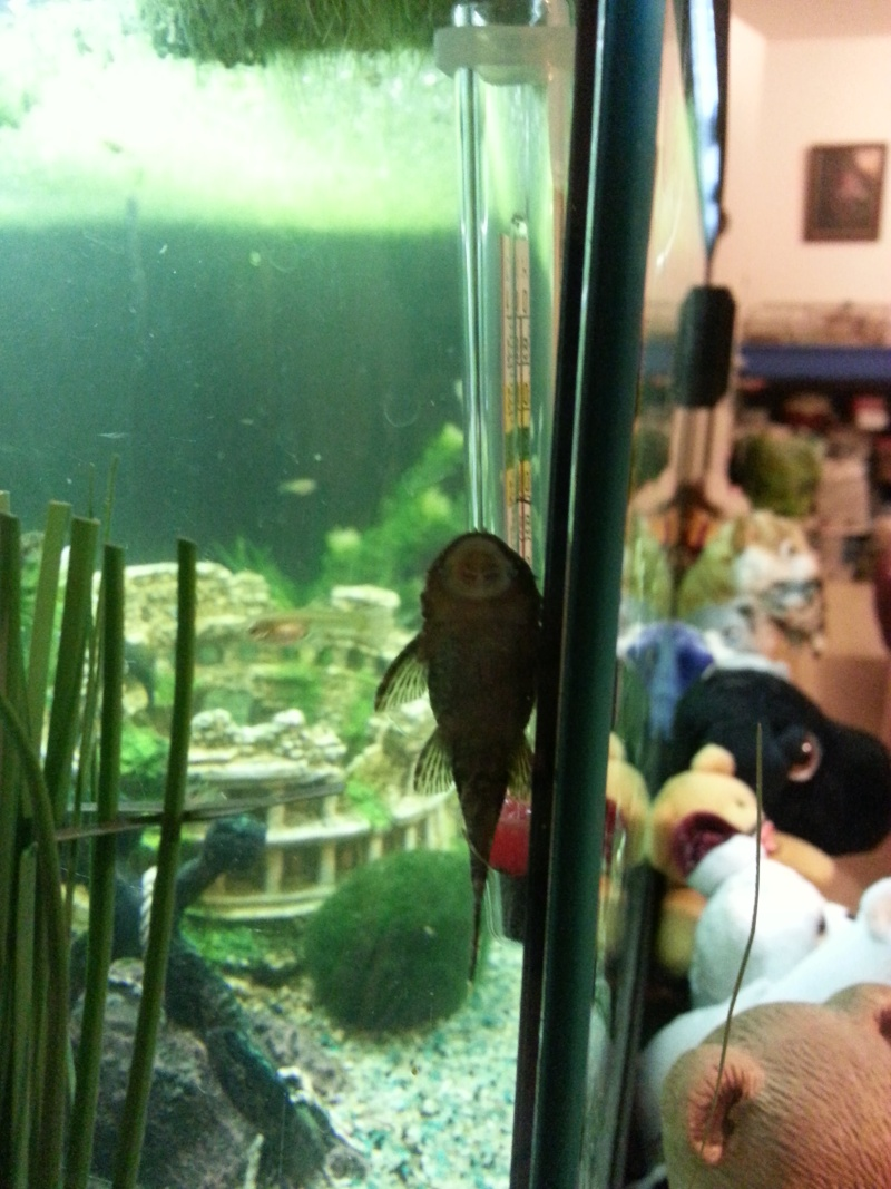 Mon aquarium avec betta et guppy 20150122