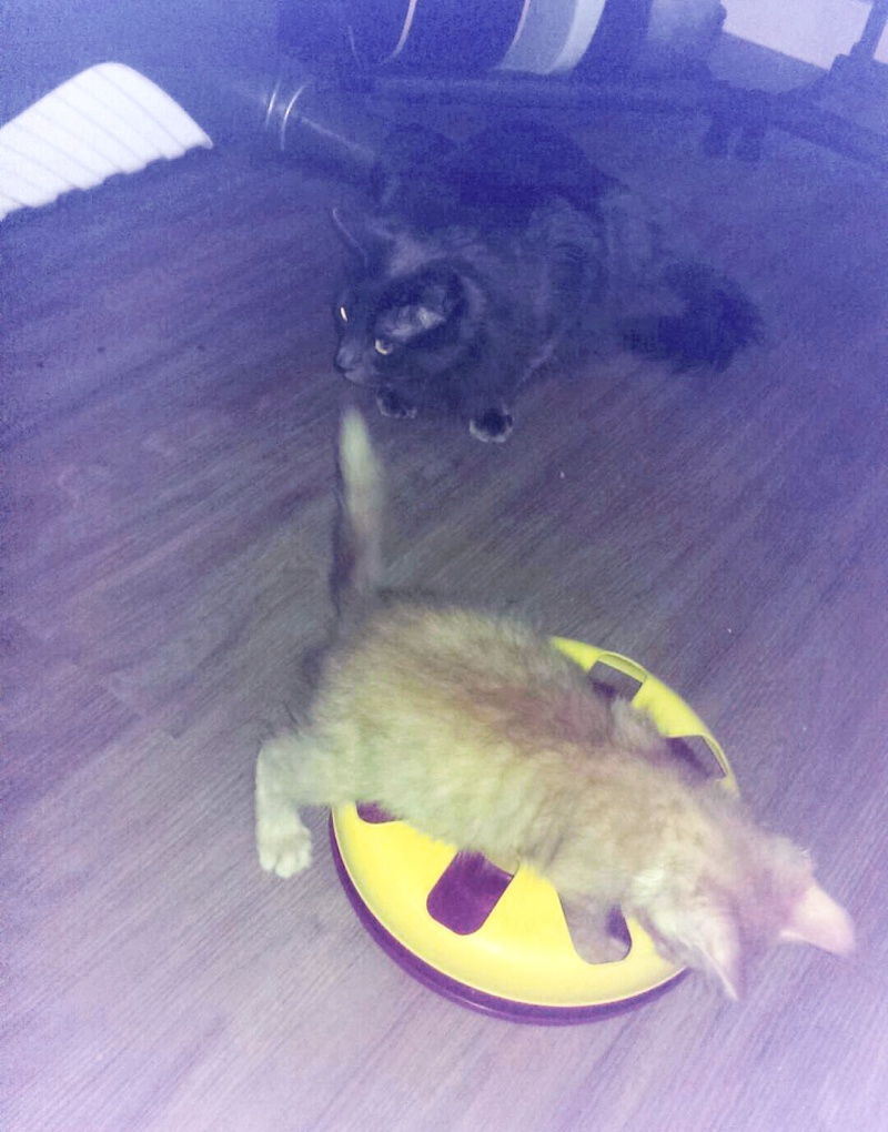 HELIO (Whiskas) et NEL (Giddy) - Page 3 Imag0110