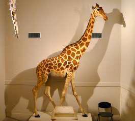ZARAFA - La girafe de Charles X, dite Zarafa D437c610