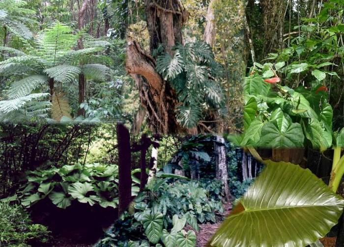 Forêt du Cameroun 0000_038