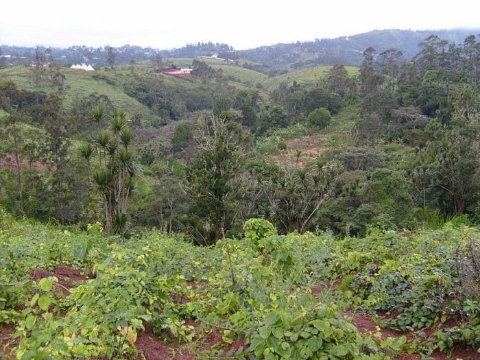 Forêt du Cameroun 0000_039
