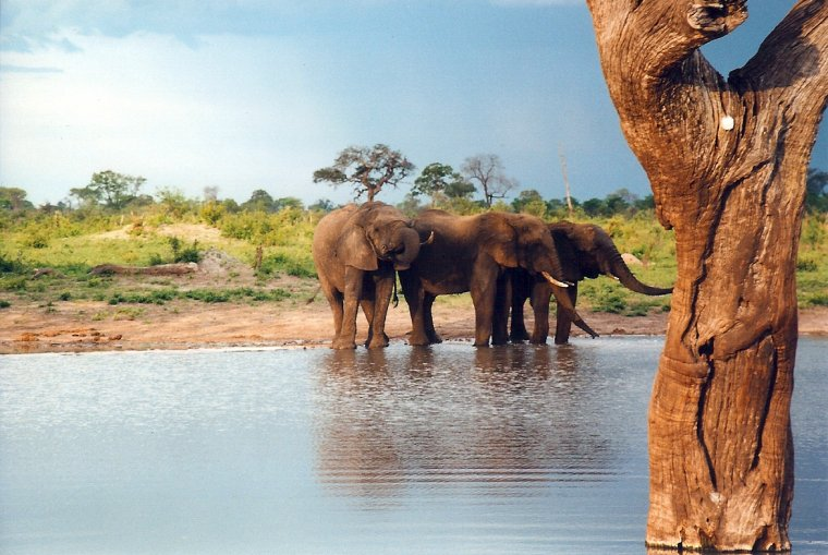 Les Pays : Zimbabwe 000_0346