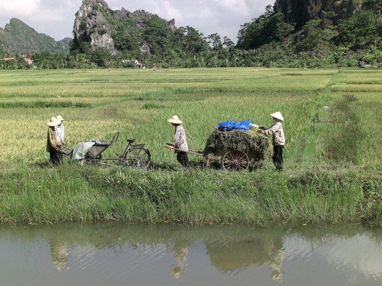 Les Pays - Vietnam 000_0539