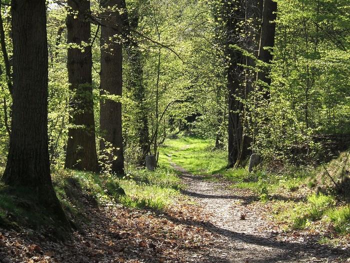Forêt - Définition 000_0951
