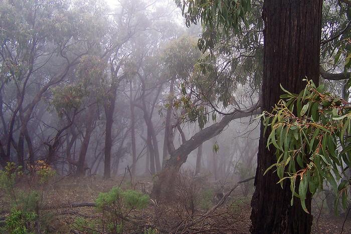 Forêt - Définition 000_0952