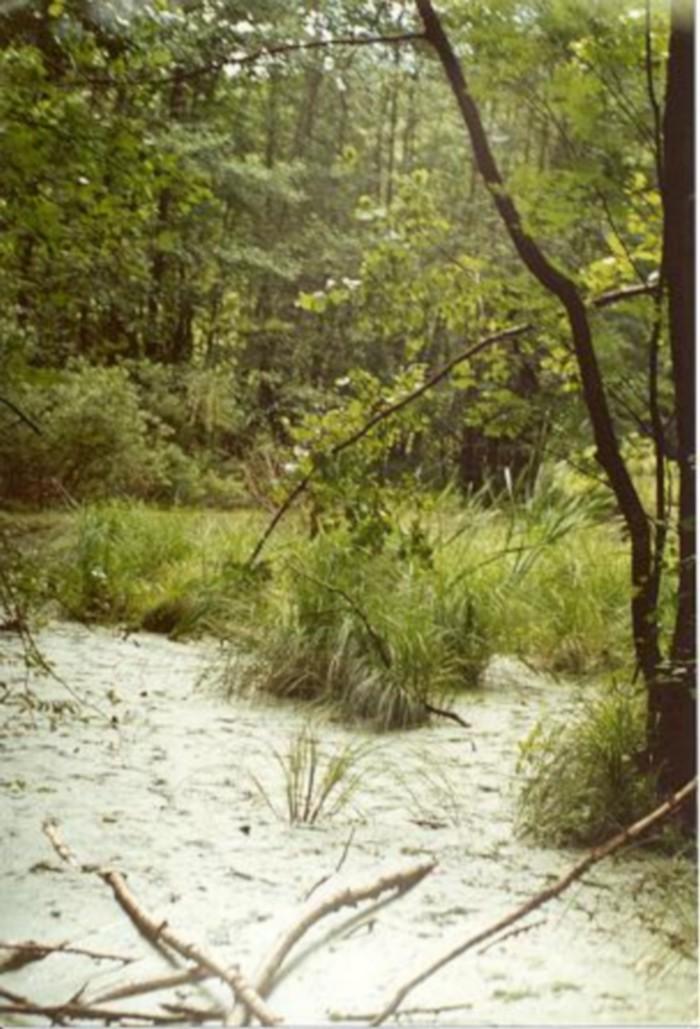 Forêt - Définition 000_0953