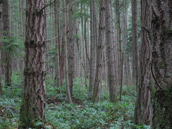 Forêt - Définition 000_0954