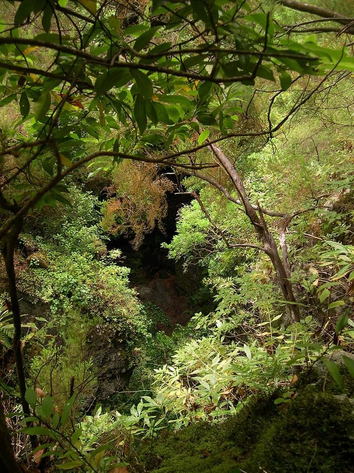 Forêt - Définition 000_0955