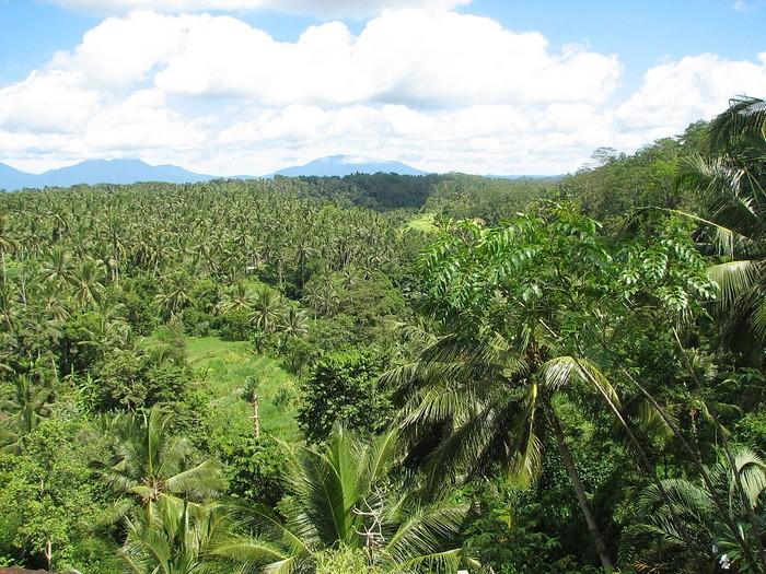 Forêt - Définition 000_0956