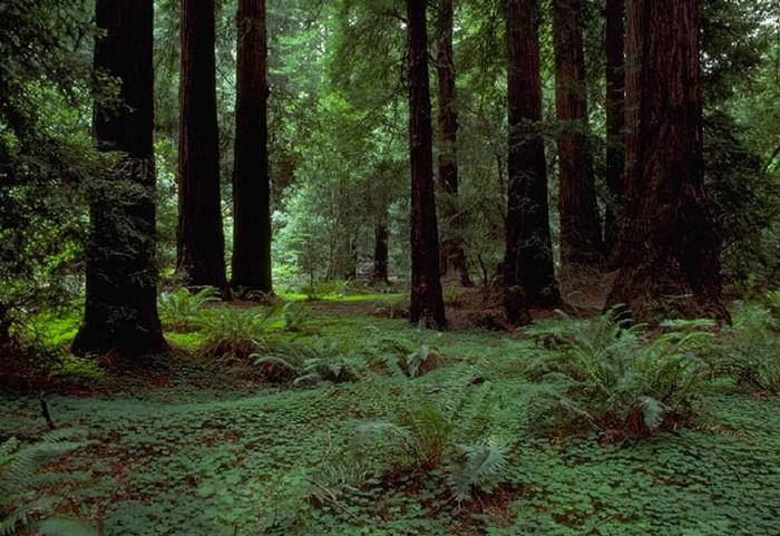 Forêt - Définition 000_0957