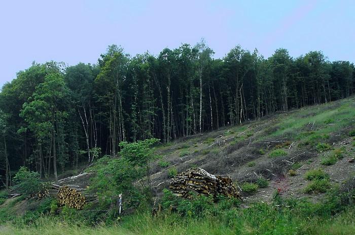 Forêt - Définition 000_0958