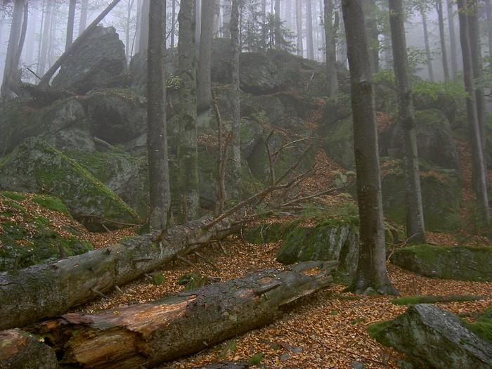 Parc national - Définition 000_1031