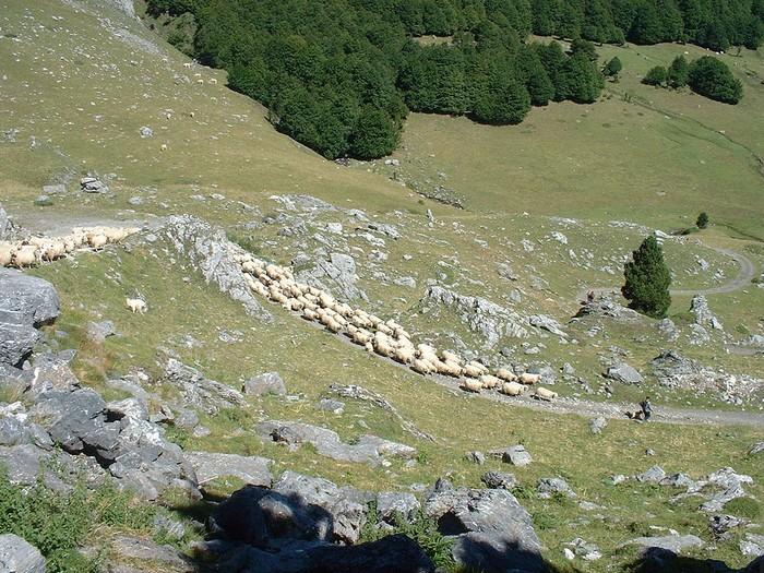 Chaîne des Pyrénées 000_1374