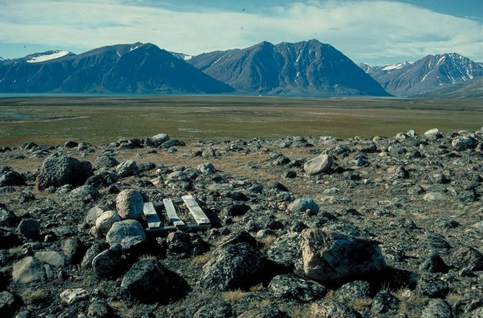 Groenland - Parc national du Nord-Est   000_1619