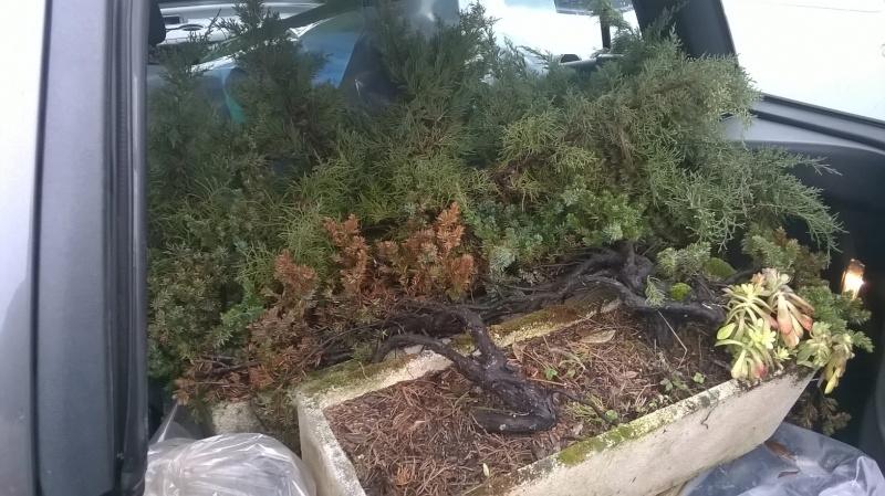 Un bagagliaio di piante Wp_20112