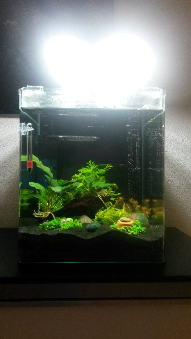2 ème aquarium : nano 30 litres 20150210