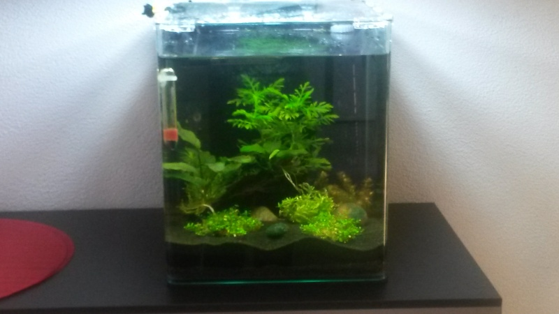 2 ème aquarium : nano 30 litres Vue_d_10