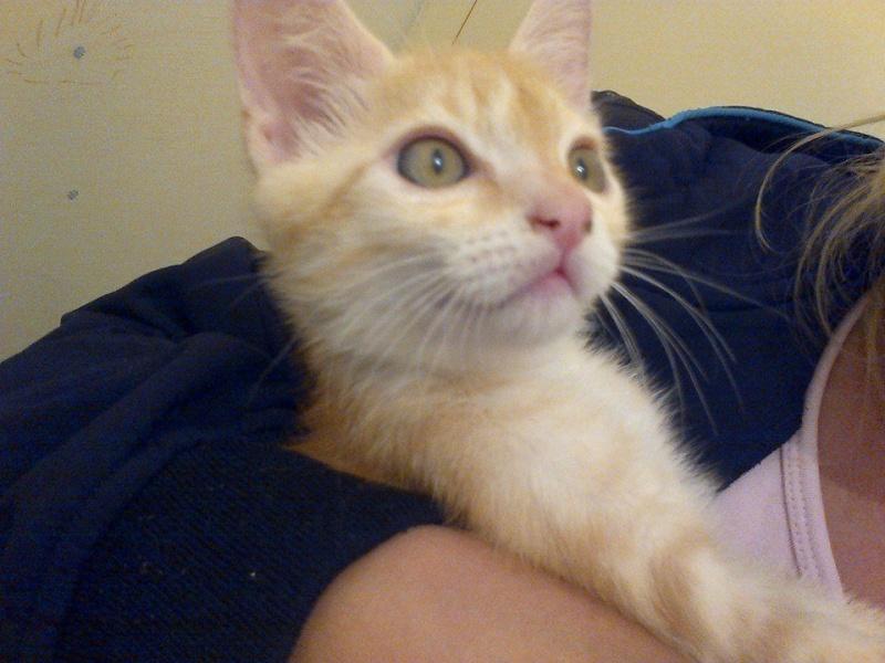 JIMY, adopté en Septembre  10521110