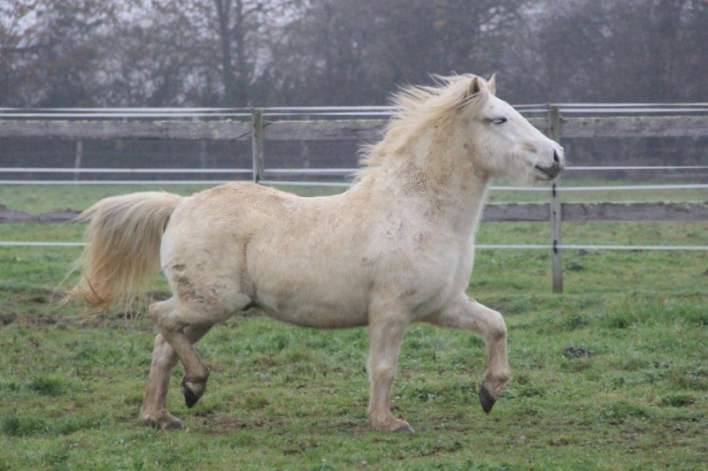 Machu, ancien poney de club Change21