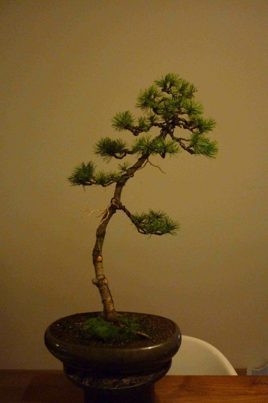 I need help with identification of a pine Pine110