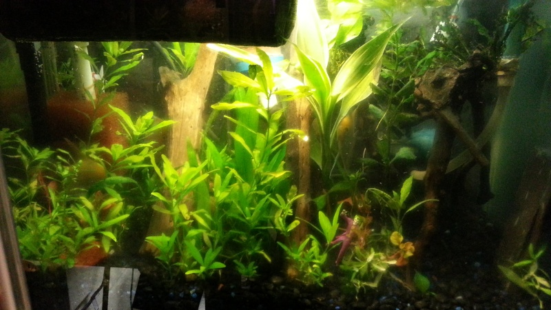 update on my planted tank  20150110