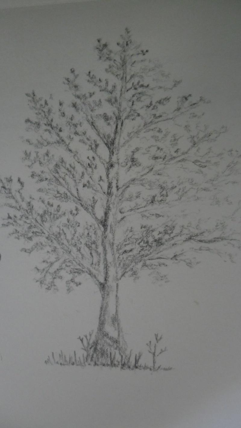 Quelques dessins Sam_0816