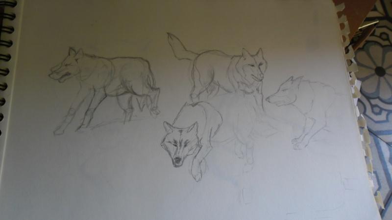 Quelques dessins Sam_0821