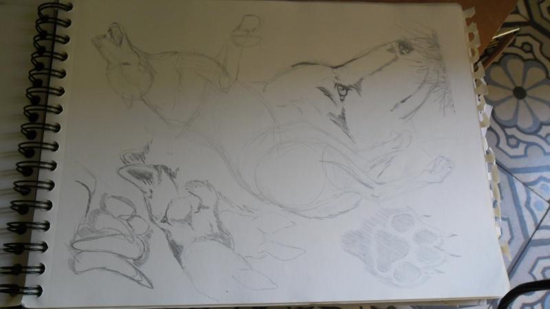 Quelques dessins Sam_0823