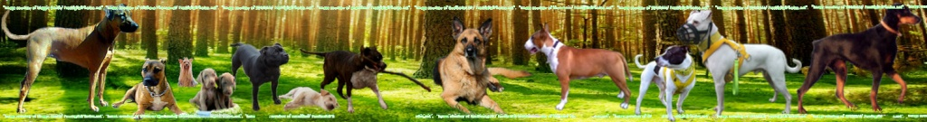 All Breeds Dog forum