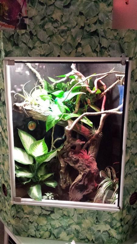 Modification projet pour installation terrarium tropical avec Anolis - Page 6 Palu_110