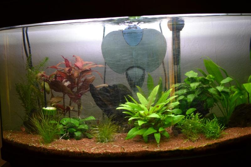 Surpopulation dans mon aquarium  - Page 4 Dsc_0020