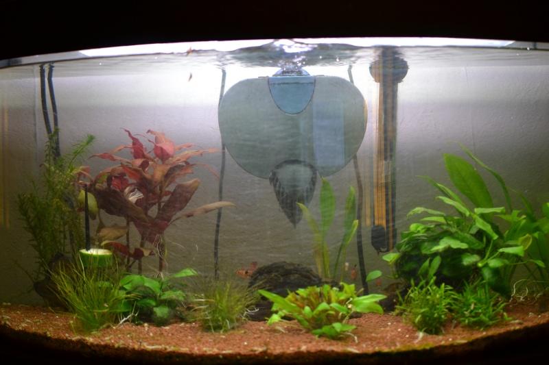 Surpopulation dans mon aquarium  - Page 4 Dsc_0021
