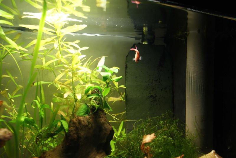 RSN male QDV et femelle QDV Maman_10