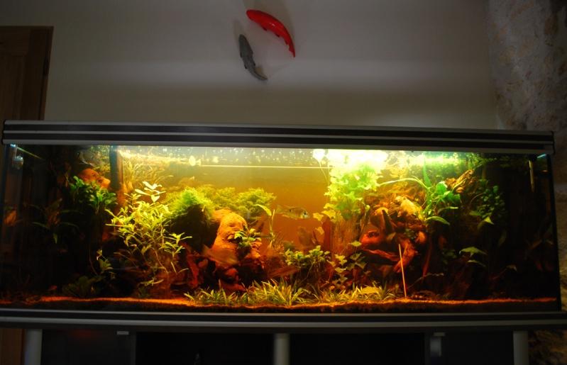 On ne s'ennuis pas en aquariophilie/ aquarium 830 litres  - Page 3 Aqua10