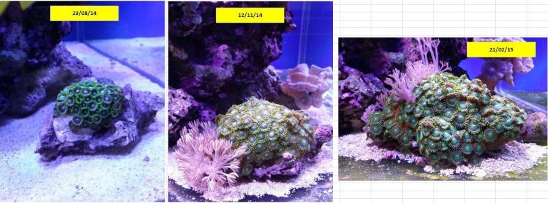 bac de 230L Blau gran cubic 92 - Page 4 Captur20