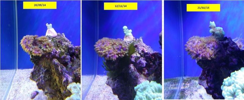 bac de 230L Blau gran cubic 92 - Page 4 Captur25