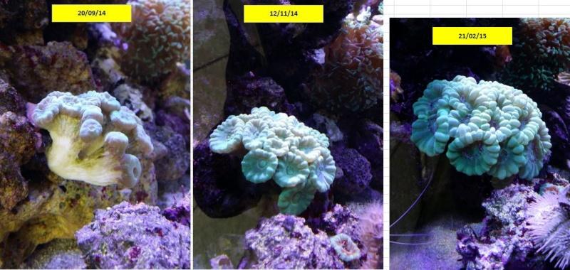 bac de 230L Blau gran cubic 92 - Page 4 Captur31