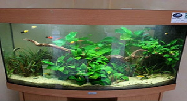 Lancement Aquarium 55L - Betta 20130211