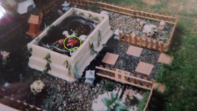 reamenagement de mon bassin de jardin - Page 4 Sam_0730