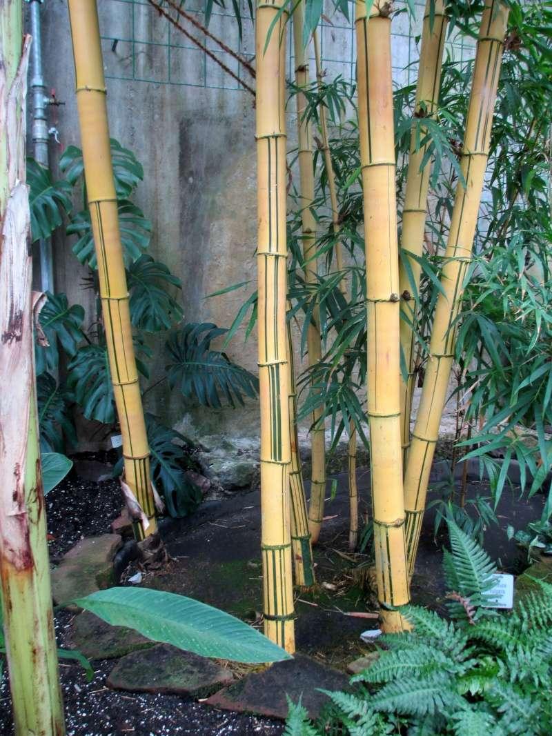 Bambus - Kultur, Aussaat, Pflege, Diskussion und Bilder von Bambusa und Fargesia - Seite 4 Img_2640
