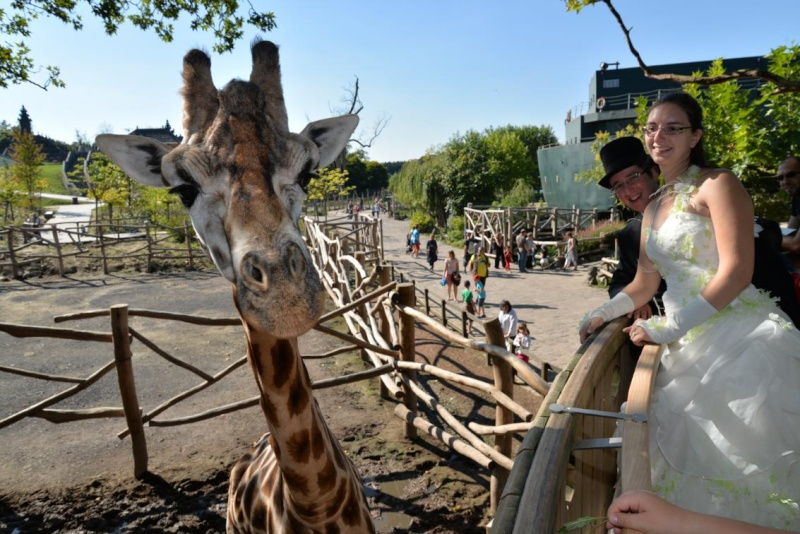 [18-31 octobre 2014] Voyage de noces à Walt Disney World et à Universal - Page 13 Girafe10
