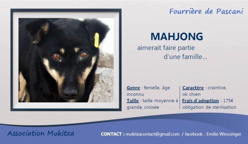 MAHJONG, F-X, taille moyenne, née 2011 (Pascani/LUCIAN) - En FA chez Elfina31 (Départ82) Visuel51