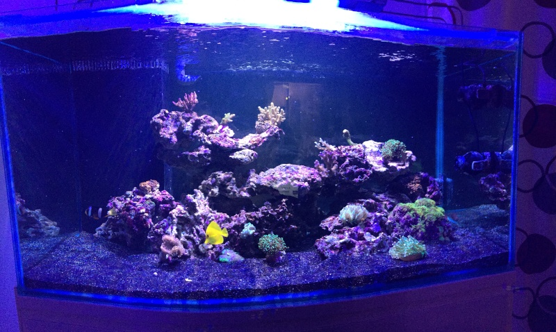 Reef 500 litres  Img_3221