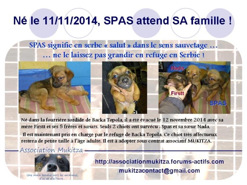 spas - SPAK (ex SPAS) M-X, né novembre 2014 (BACKA/FOURRIERE) - Adopté via SPA de Moree - EN FUITE Spas10