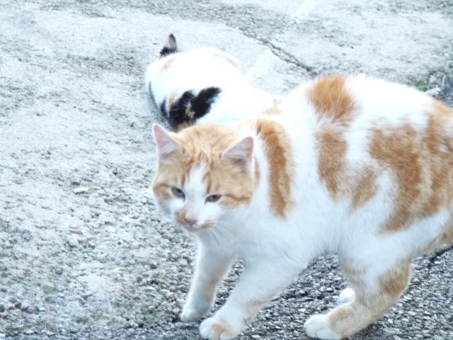 (adopés) Minette et Minou (18 mois) (13) Minou_10